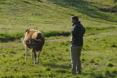 Pieter en koe